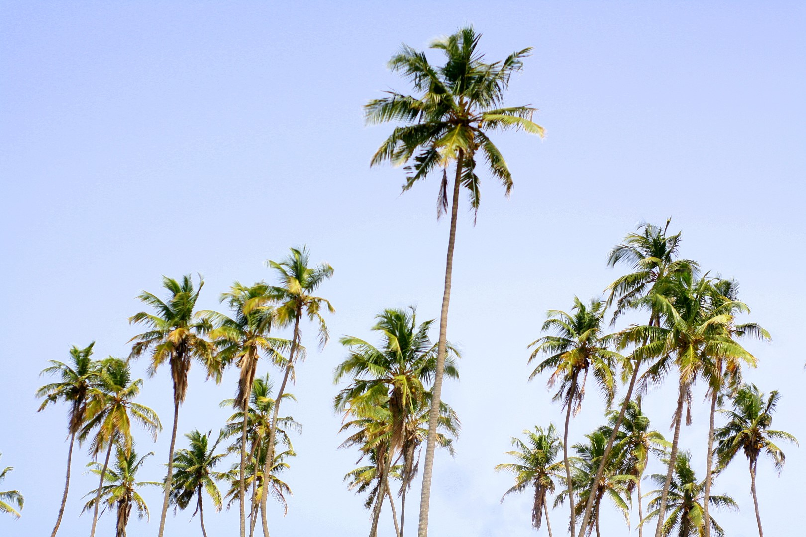Palm trees at the Badagry beach slave point of no return
