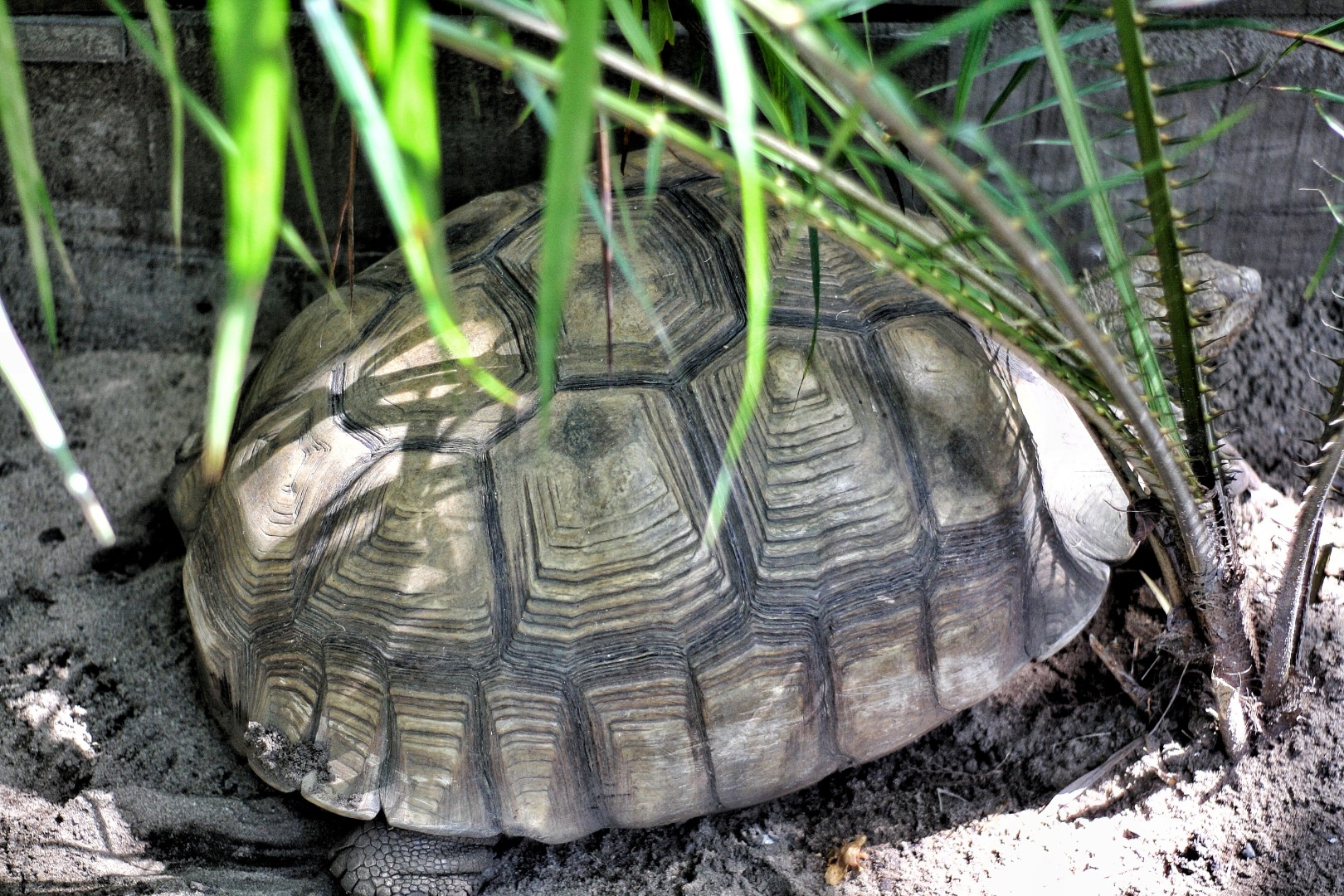 tortoise at the lufasi park